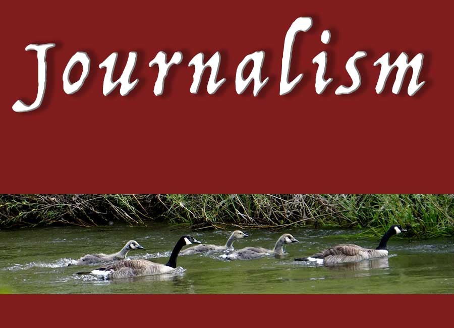 Convergent Journalism and photo of geese swimming